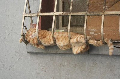Funniest cat sleeping positions 11