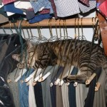 21 funny sleeping cats from the Internet