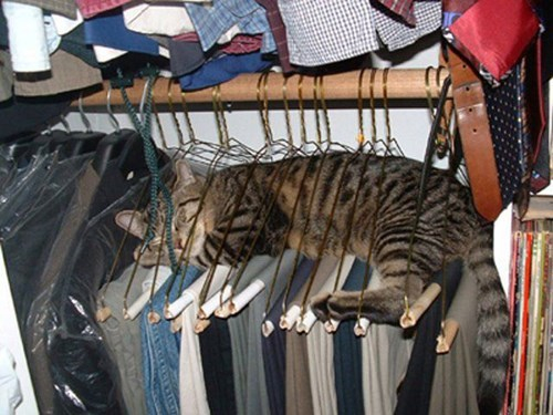 Funniest cat sleeping positions 12