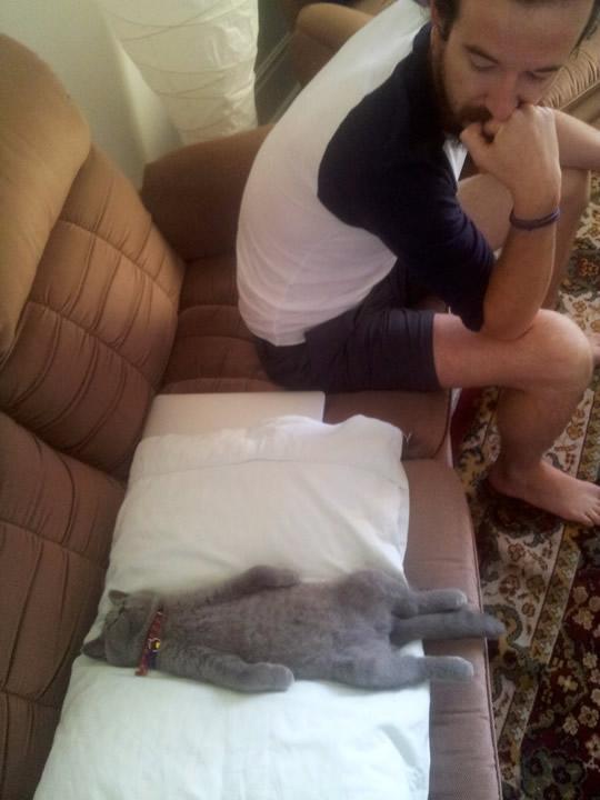 Funniest cat sleeping positions 15
