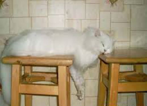Funniest cat sleeping positions 16