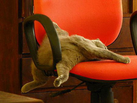 Funniest cat sleeping positions 17