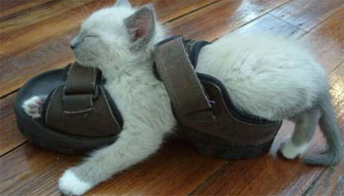 Funniest cat sleeping positions 18