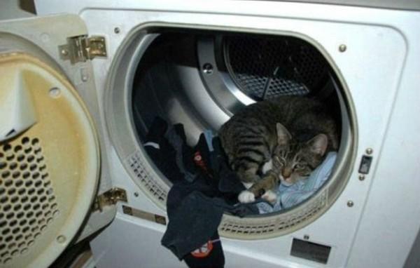 Funniest cat sleeping positions 19