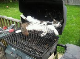Funniest cat sleeping positions 2