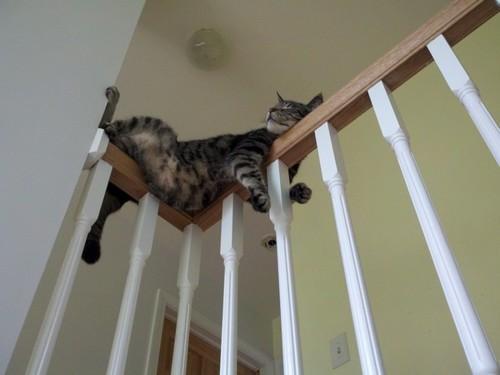 Funniest cat sleeping positions 20