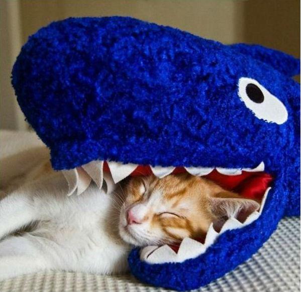 Funniest cat sleeping positions 4