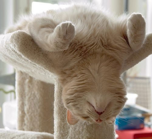 Funniest cat sleeping positions 8