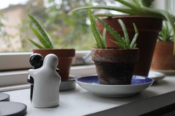 plant 30 realistic things you should own at 30