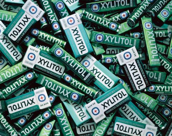 xylitol 14 things you should NEVER feed your dogs